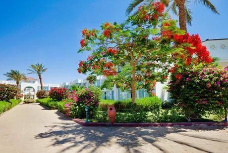 Amarante Garden Palms