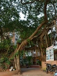Ginger Tree Beach Resort