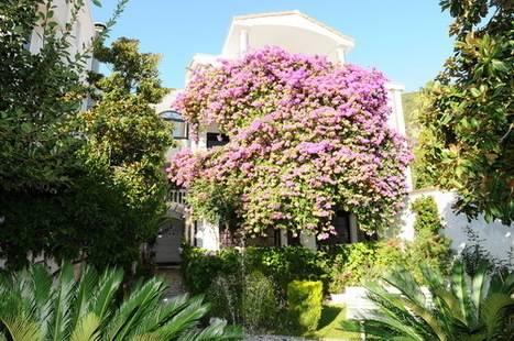 Garden Pavlovic Apt