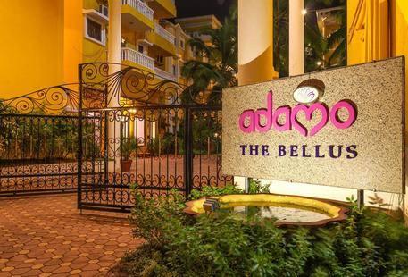 Adamo The Bellus (Ex. Sunkissed)