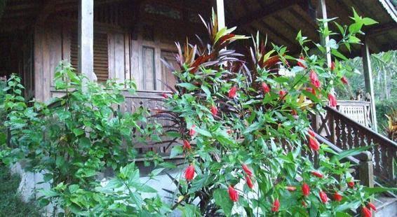 Villa Nirmala Nature Bungalow