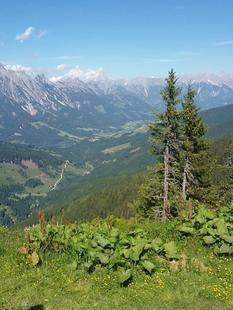 Alpen Karawanserei