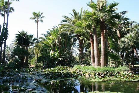 Oasis By Don Carlos Resort